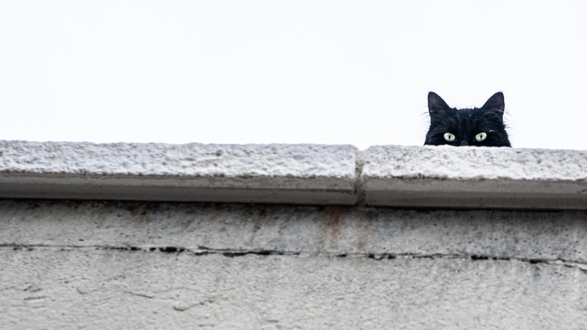 Gatos en publicidad